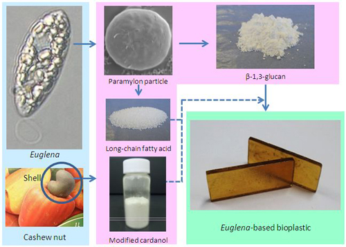 Development of Euglena-based bioplastics