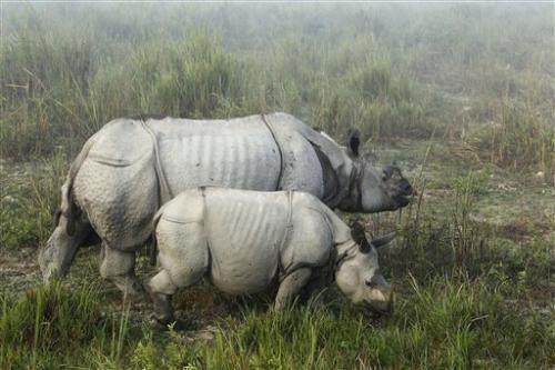 Indian park battles poachers targeting rhino horn