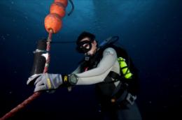 Mānoa: Scientists develop new method of estimating fish movements underwater