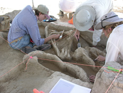 Researchers search for link between mammoth bones, early hunters