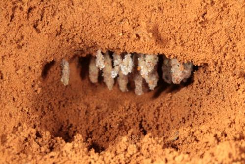 Scientists find new ghost ant genus and species: Discovery sheds light on origins of agriculture