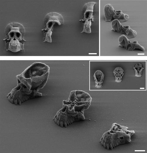 3-D printed microscopic cages confine bacteria in tiny zoos for the study of infections