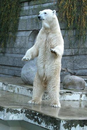 Researchers discover new retroviruses in polar bear 'Knut' and panda 'Bao Bao'