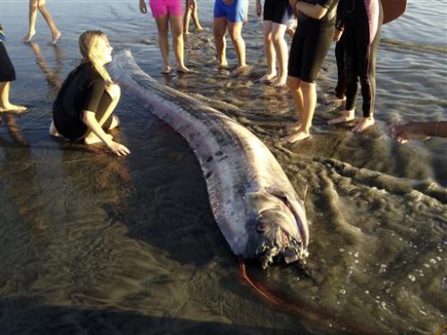 California 'sea serpents'  draw gawkers