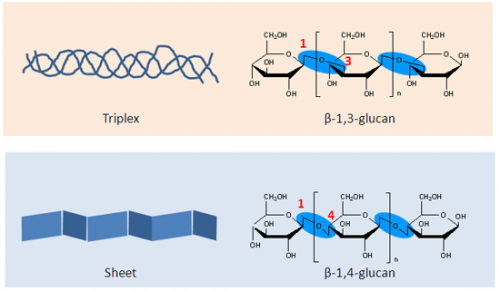 Development of Euglena-based bioplastics