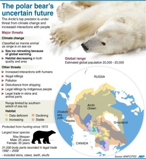 Graphic fact file on polar bears