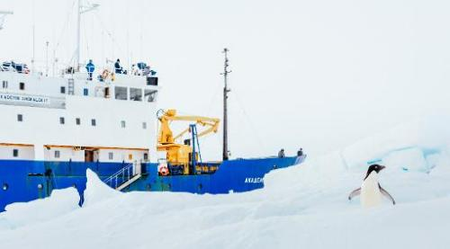 Image taken by Andrew Peacock on December 28, 2013 shows an Adelie Penguin next to the stranded ship MV Akademik Shokalskiy off