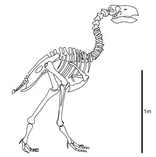 Research suggests terror bird's beak was worse than its bite