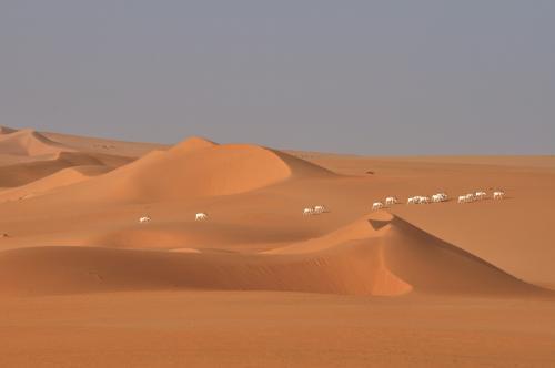 Study documents catastrophic collapse of Sahara's wildlife