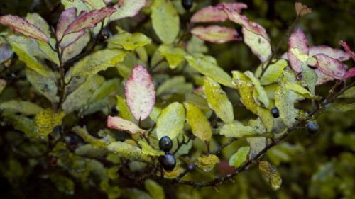 Herbal medicine through an evolutionary lens