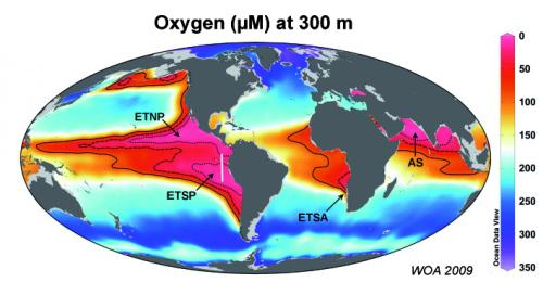 Scientists identify key factor that controls ocean nitrogen availability