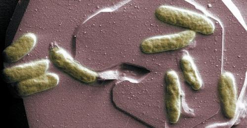 Прорыв в создании биобатарей
