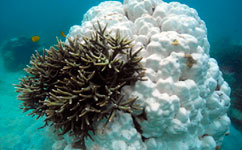 Scientists call for global action on coral reefs