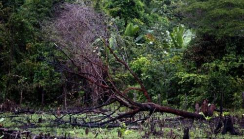 A burnt tree lies down on a road along the Amazon rainforest on February 26, 2008