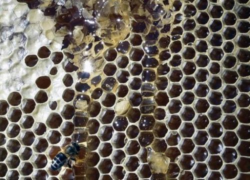 According to a new study, honeycomb cells do not start out as hexagons but as circles