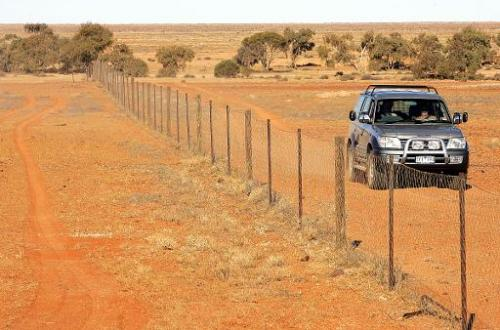 A 'dingo fence' divides the desolate outback landscape on the edge of the Simpson Desert, keeping the carnivores from entering s