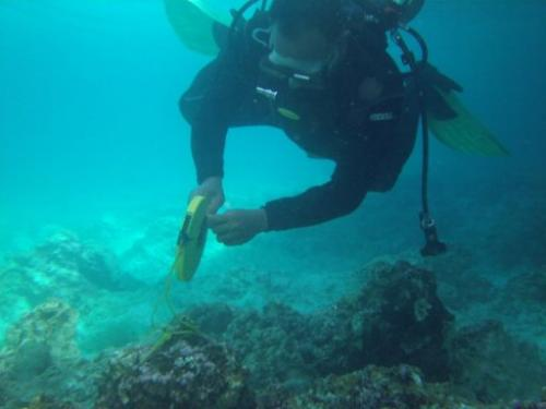 A diver investigates the damage to corals after at the Tubbataha reef, off Palawan island, on January 22, 2013
