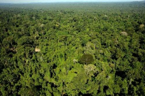 Aerial view of the Amazonic forest reserve of Trairao, western Para state, northern Brazil on December 4, 2011