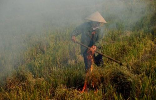 A farmer burns rice straw on her family's  rice field to prepare land for the next crop near Hanoi on June 14, 2013