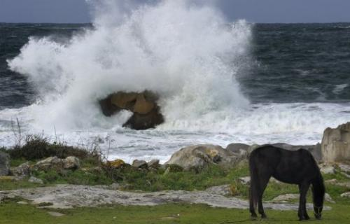 A horse grazes as waves hit the coast of Spain on January 22, 2013