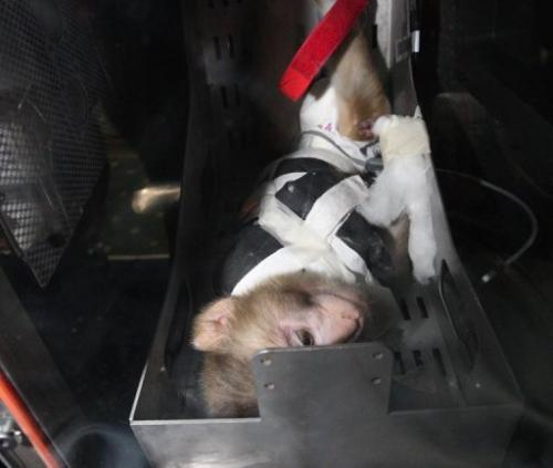 A monkey inside the replica capsule of an Iranian-made rocket in Tehran on February 7, 2011