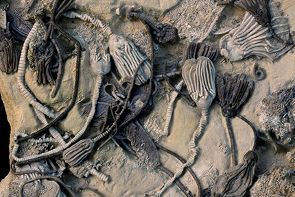Ancient fossilized sea creatures yield oldest biomolecules isolated directly from a fossil
