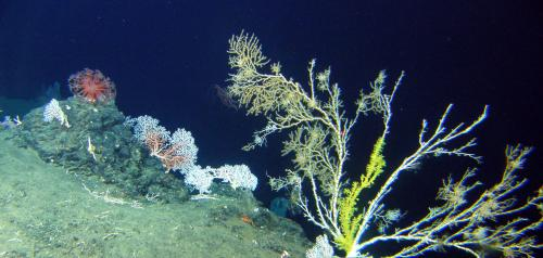 An ecosystem-based approach to protect the deep sea from mining