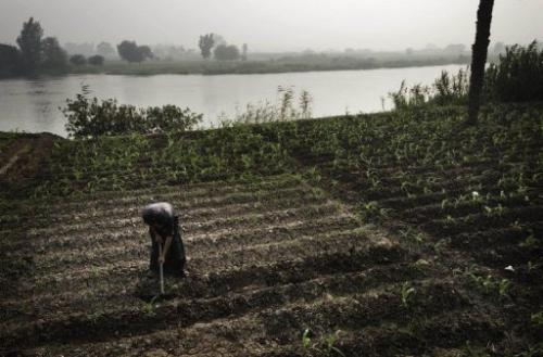 An Egyptian farmer tends to his fields on the banks of the Rasheed river in the northern Giza province on June 22, 2013