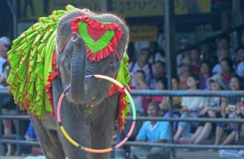 An elephant performs for tourists during a show in Pattaya, on March 1, 2013
