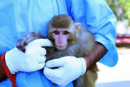 An Iranian scientist holds a live monkey at an unknown location on January 28, 2013, which Iranian news agencies said returned a