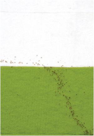 Ants follow Fermat's principle of least time