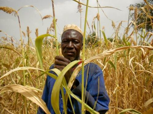A photo released on December 12, 2011 by Oxfam shows a man in a sorgho field in the region of Sanmatenga, Burkina Faso