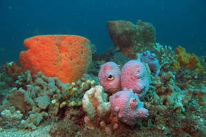 Astonishing diversity of Western Australian sponge species