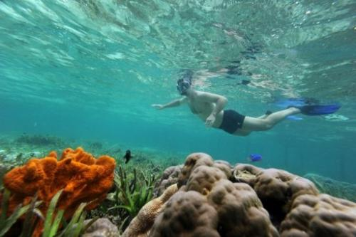 A tourist snorkles over coral reef off Mansuar Island in eastern Indonesia's Papua region on October 22, 2011