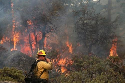 A US Forest Service firefighter monitors a spot fire on August 24, 2013 in Yosemite National Park, California