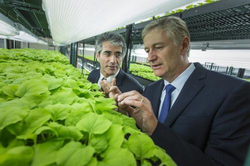 Растительная фабрика по производству вакцин