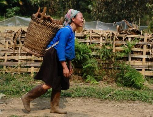 A woman carries cassava home from a field  in Vietnam's northern province of Ha Giang on March 6, 2012