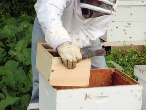Battle against bee blood eating Acari