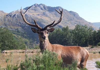 Big game hunting in Spain has increased in the last 30 years