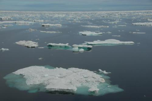Biologists lead international team to track Arctic response to climate change