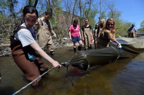 Biology students pull on a trap used to catch glass eels on the Quassaick Creek May 1, 2013 in Newburgh, New York