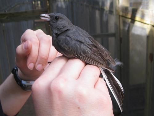 Birds choose sweet-smelling mates