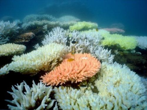 Bleaching on a coral reef near Halfway Island in Australia's Great Barrier Reef, October 2, 2012