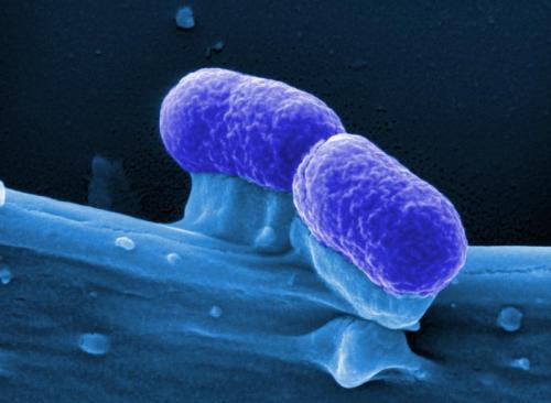 Blockade of pathogen's metabolism