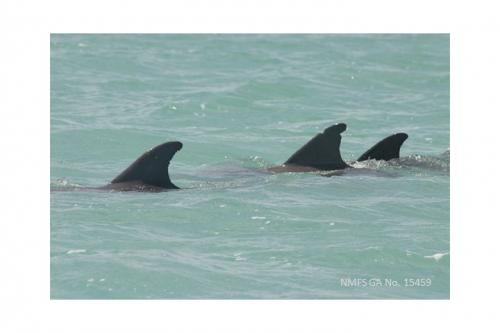 Bottlenose dolphin leaders more likely to lead relatives than unrelated individuals