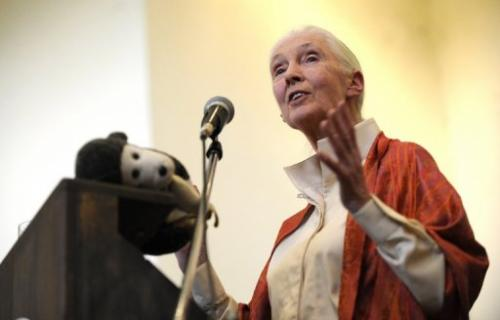 British primatologist Jane Goodall delivers a speech at the National Museum on January 26, 2013 in Nairobi