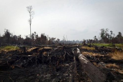 Burned trees and clearing in a protected peatland forest in the district of Pelalawan, Riau, Sumatra, June 29, 2013