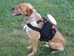 Canine remote control