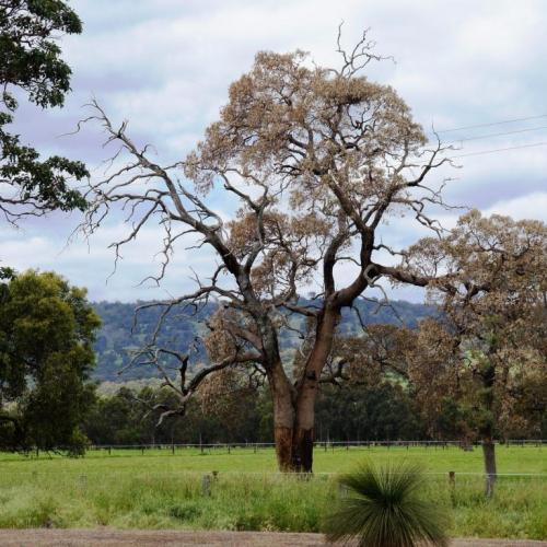 Capturing tree data with free smartphone app