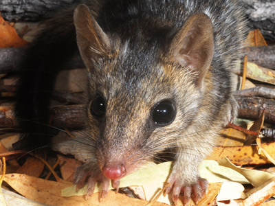 Cats threaten native mammal survival in our tropical savannas